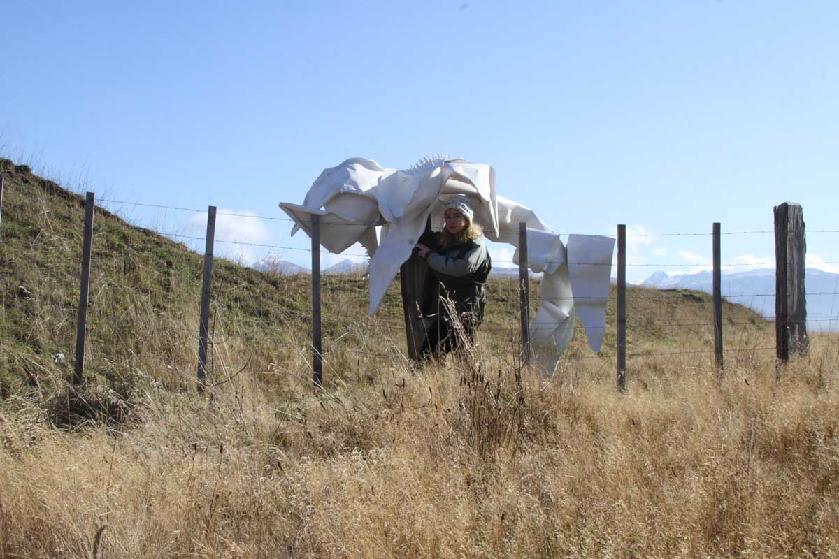 Pilar Quinteros: Patagonian Orchids: Letter to Chile